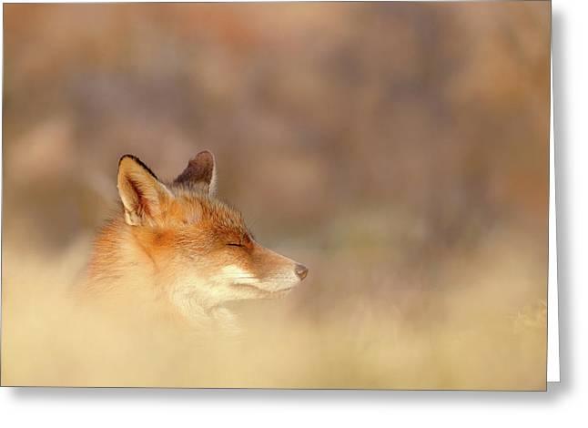 Zen Fox Series - Dream Fox Greeting Card