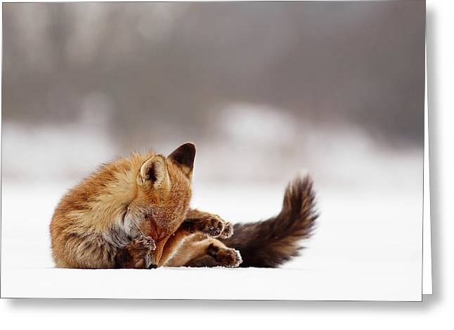 Zen Fox Series -shy Fox On Ice Greeting Card by Roeselien Raimond