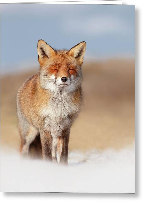Zen Fox Series- Smiling Fox In The Snow Greeting Card