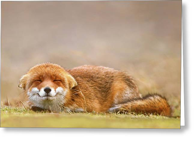Zen Fox Series - Smiling Fox Is Smiling Greeting Card