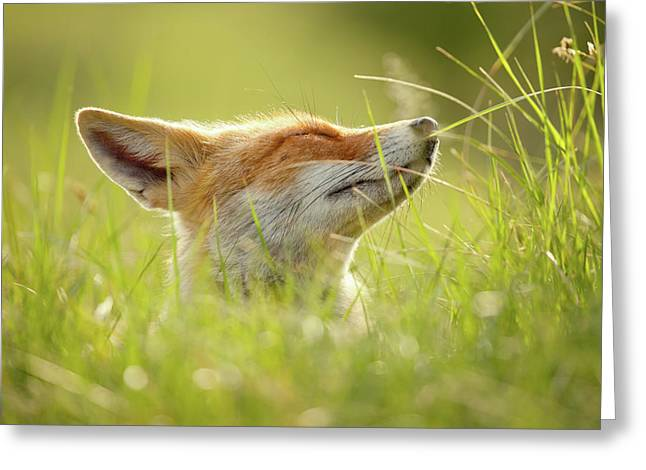 Zen Fox Series - Summer Zen Fox Greeting Card