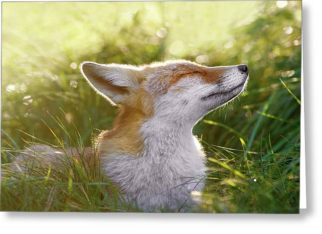 Zen Fox Series - The Sniffer Greeting Card by Roeselien Raimond
