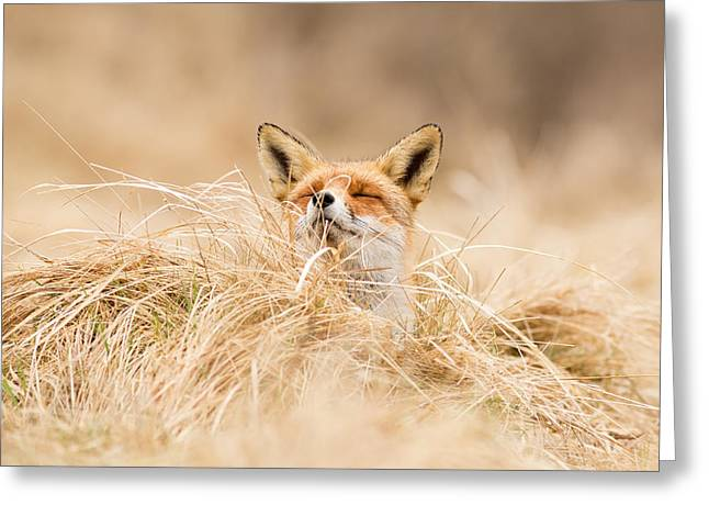 Zen Fox Series - Zen Fox 2.7 Greeting Card by Roeselien Raimond