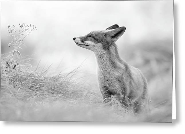 Zen Fox Series - Zen Fox In Black And White Greeting Card by Roeselien Raimond