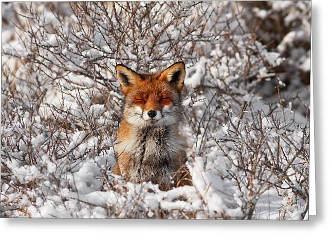 Zen Fox Series - Zen Fox In The Snow Greeting Card by Roeselien Raimond