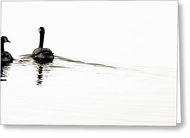 Zen Geese Greeting Card by Bob Coates