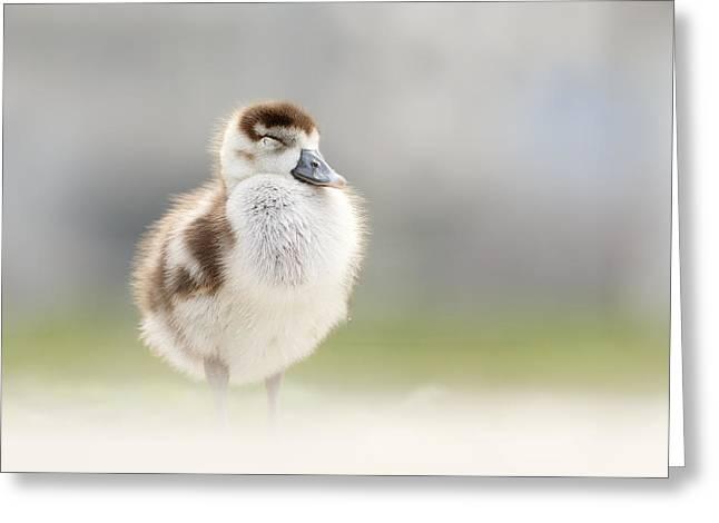 Zen Gosling Greeting Card