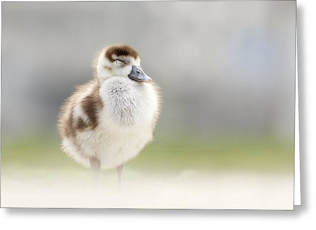 Zen Gosling Greeting Card
