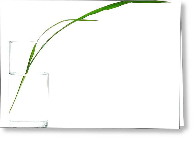 Zen Grass Greeting Card by Mark Fuller