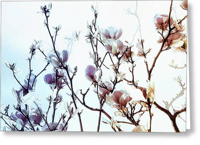Zen Thoughts Greeting Card by Elaine Manley