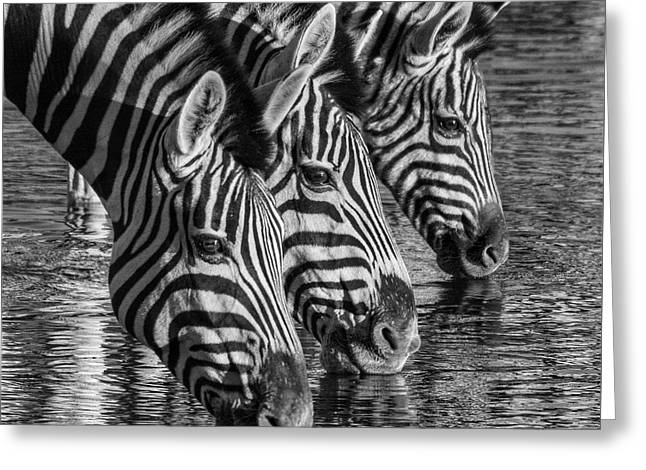 Zerba At The Watering Hole Greeting Card