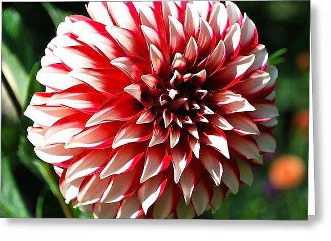 Zesty Dahlia Greeting Card