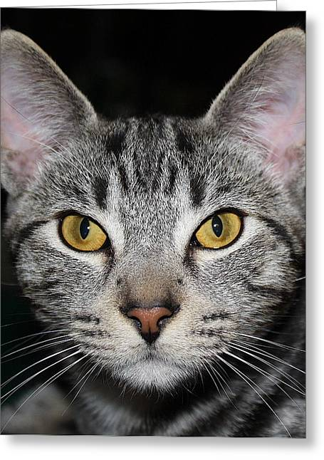 Green And Yellow Greeting Cards - Ziggy Greeting Card by Claire McGee