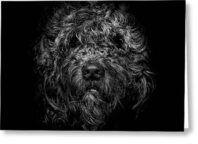 Greeting Card featuring the photograph Ziggy Portrait No 1 by Brian Carson