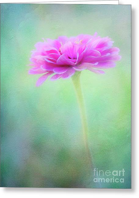 Painted Pink Zinnia Greeting Card