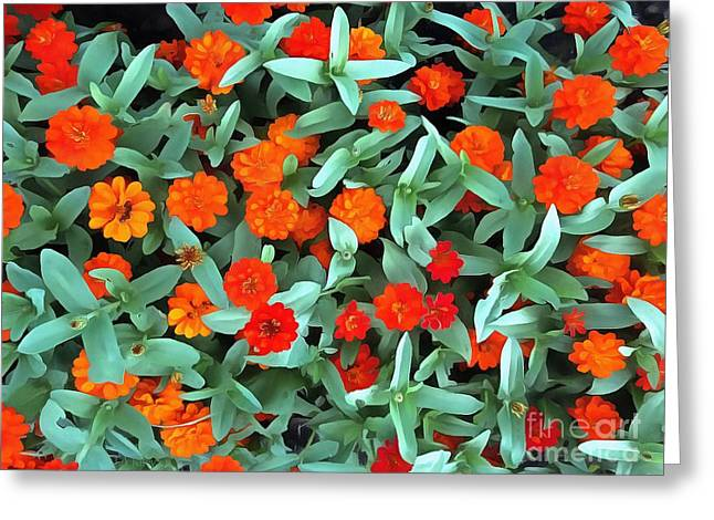 Greeting Card featuring the photograph Zinnia Flower - Profusion Orange by Janine Riley