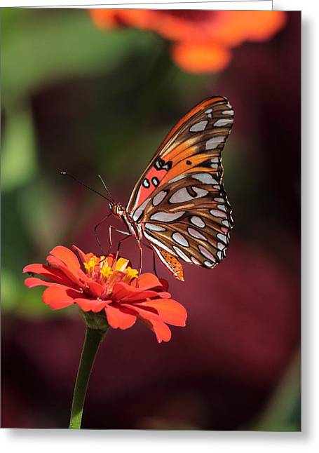 Zinnia With Butterfly 2668 Greeting Card