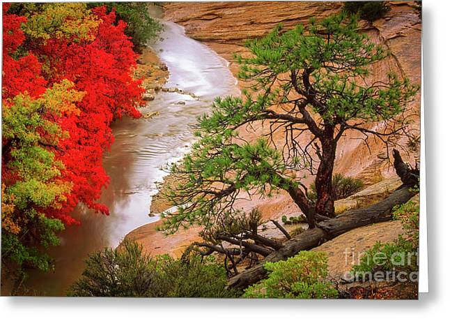 Zion After The Flood Greeting Card by Inge Johnsson