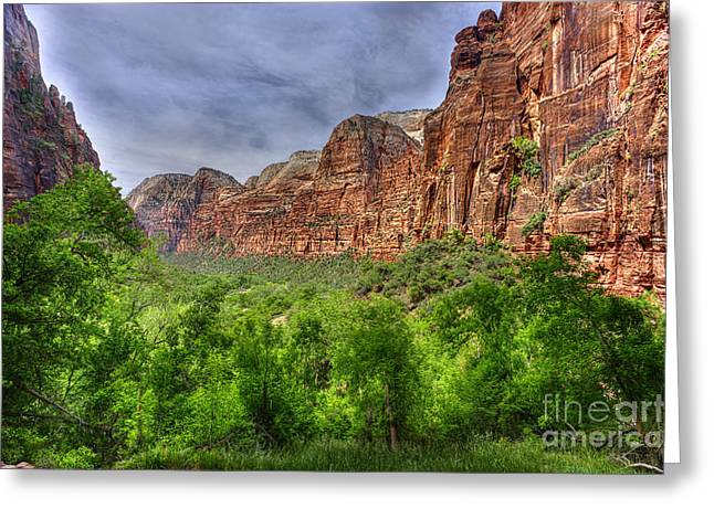 Zion View Of Valley With Trees Greeting Card