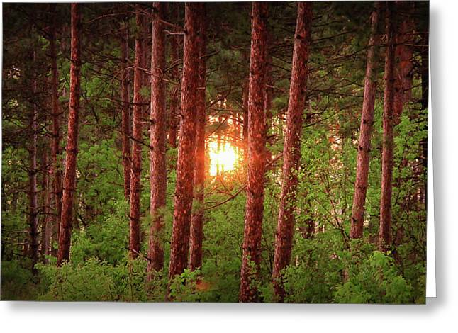010 - Pine Sunset Greeting Card