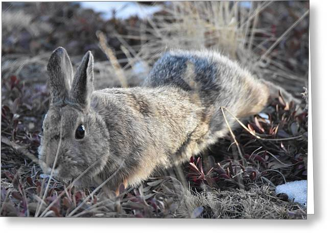 Greeting Card featuring the photograph 02-27-18 Rabbit by Margarethe Binkley