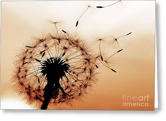 A Dandelion Blowing Seeds In The Wind Greeting Card