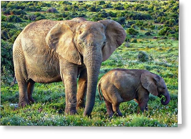 Greeting Card featuring the photograph African Elephants by Anthony Dezenzio