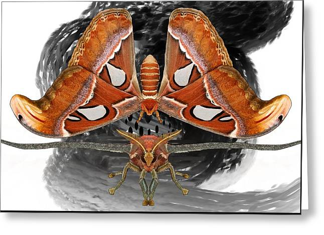 Atlas Moth7 Greeting Card