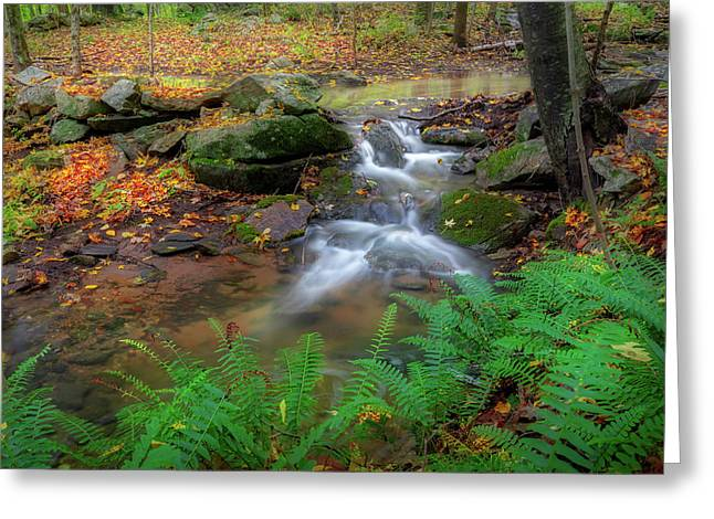 Greeting Card featuring the photograph Autumn Falling by Bill Wakeley