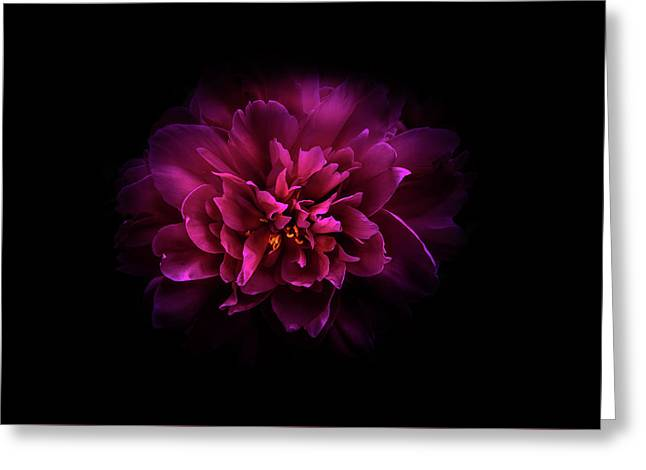 Greeting Card featuring the photograph Backyard Flowers 55 Color Version by Brian Carson