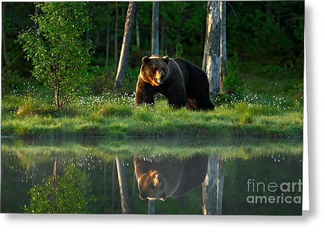 Big Brown Bear Walking Around Lake In Greeting Card by Ondrej Prosicky