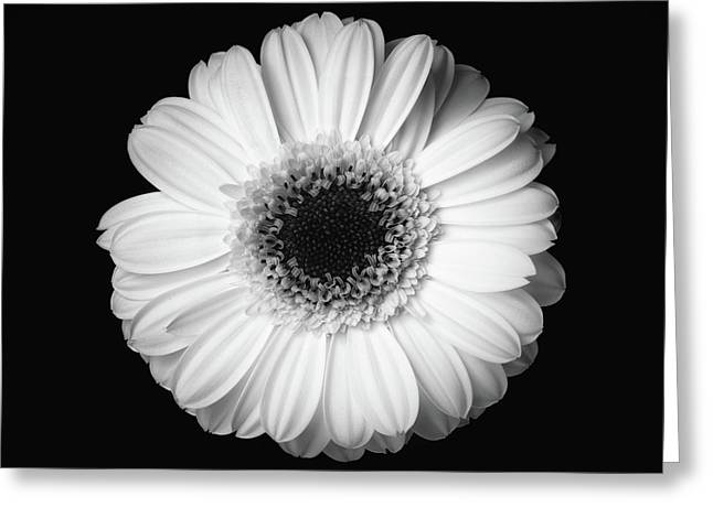 Black And White Flower Greeting Card