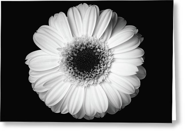 Greeting Card featuring the photograph Black And White Flower by Mirko Chessari
