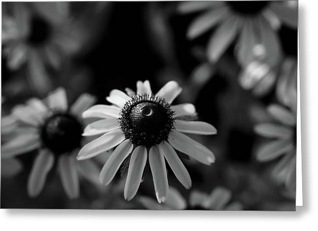 Greeting Card featuring the photograph Black-eyed Susan  by Jeff Phillippi