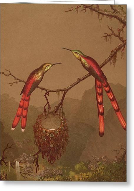 Brazilian Hummingbirds Greeting Card