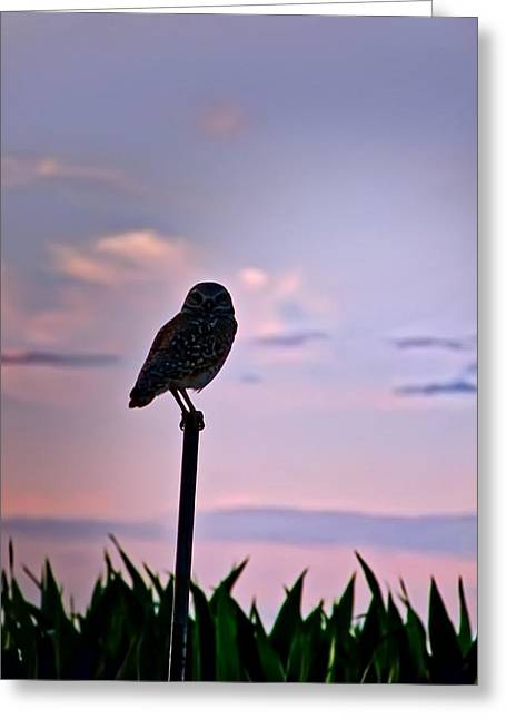 Burrowing Owl On A Stick Greeting Card