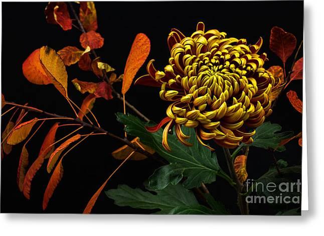 Close-up Of Autumn Dahlia Flower. Macro Greeting Card