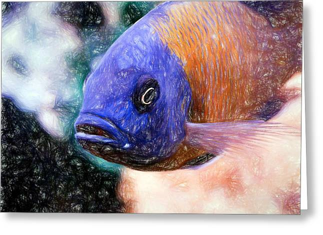 Colored Pencil Red Fin Borleyi Cichlid Greeting Card