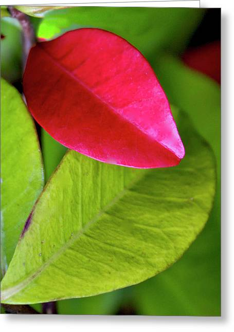 Colours. Red Greeting Card