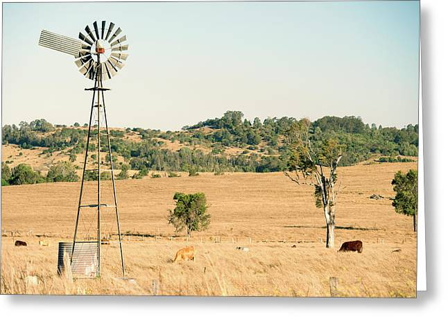 Greeting Card featuring the photograph Cows And A Windmill In The Countryside. by Rob D Imagery