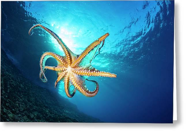 Day Octopus  Octopus Cyanea Greeting Card