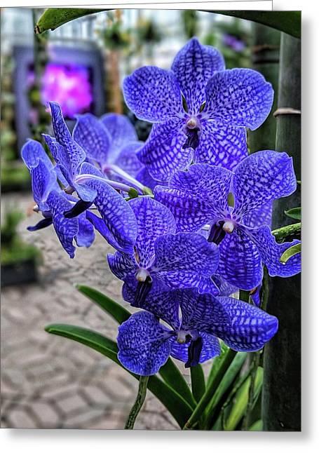 Deep Purple Orchid Greeting Card
