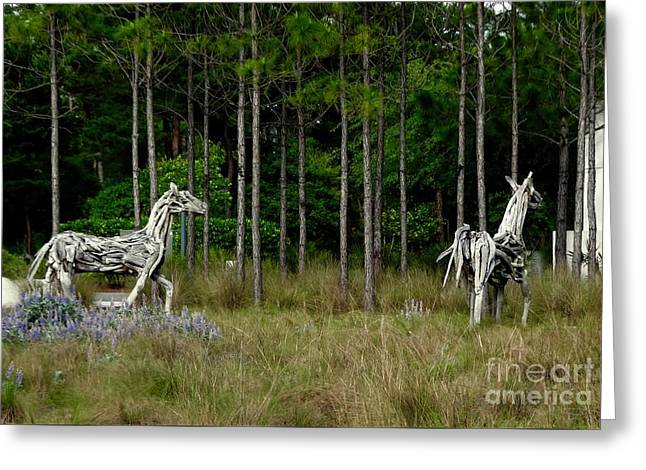 Driftwood Horses Greeting Card