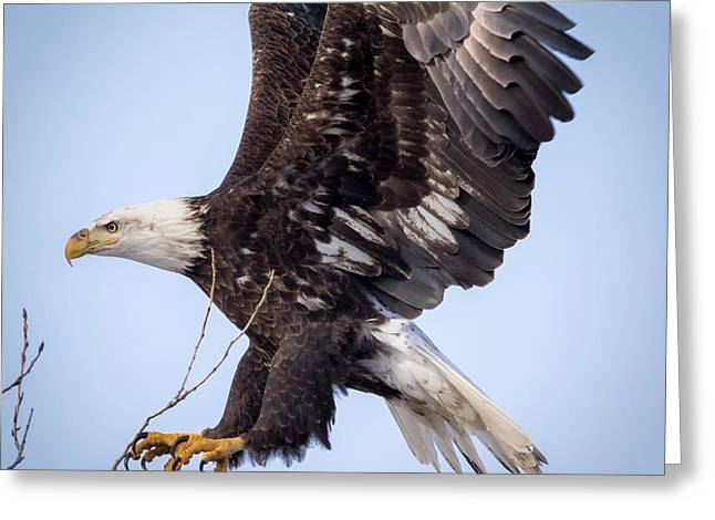 Eagle Coming In For A Landing Greeting Card