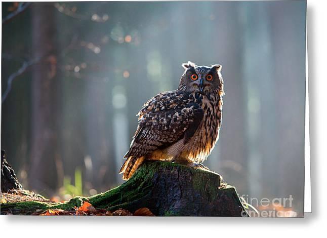 Eurasian Eagle Owl Bubo Bubo Sitting On Greeting Card