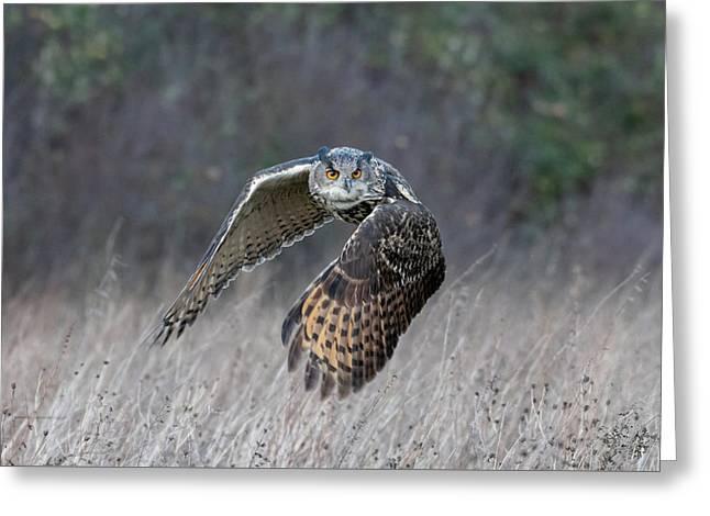 Eurasian Eagle Owl Flying Greeting Card