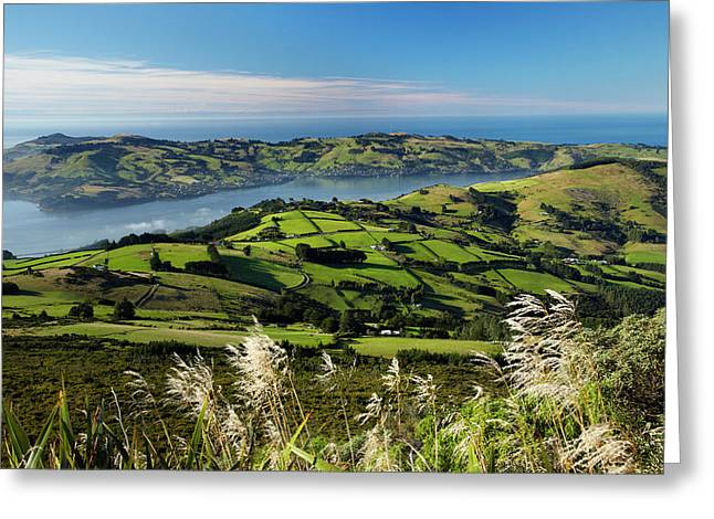Farmland At Upper Junction, And Otago Greeting Card by David Wall