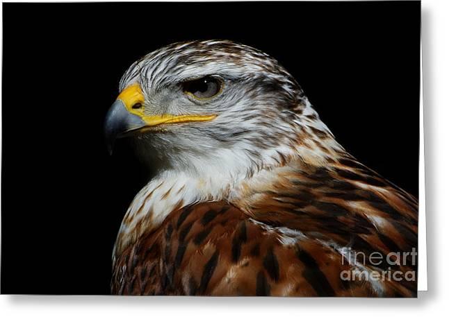 Greeting Card featuring the photograph Ferruginous Hawk Portrait by Sue Harper