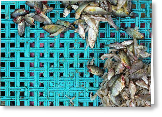 Greeting Card featuring the photograph Fish At The Market by Nicole Young