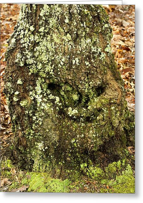 Forest Troll Greeting Card